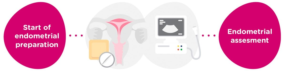 Endometrial preparation + gynaecological tests